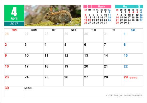 4月 ノウサギ