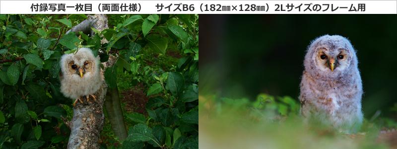 特別付録写真(両面使用)1