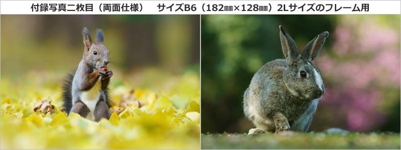 特別付録写真(両面使用)2
